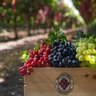 Виноградинарство